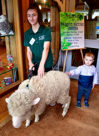 4/19/2019 Mike Orazzi | Staff Britni Pastyrnak holds on to Gus, a sheep, during the annual egg hunt at the Harry C Barnes Memorial Nature Center in Bristol on Friday morning as Greyson Fortier, 2 1/2, says hello.