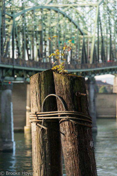 bridge-02001.jpg