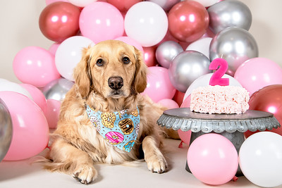 Bailey 2nd Bday