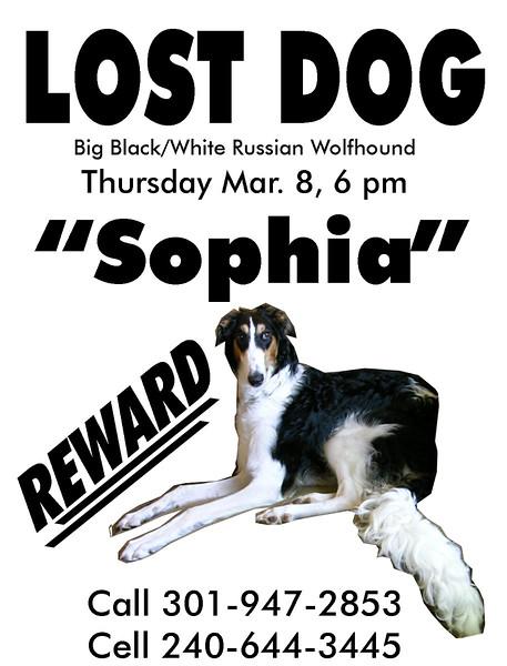 2007 Poster_Sophia_Lost.jpg