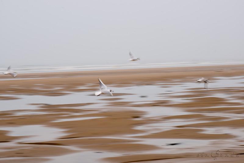 Espíritus del Océano. Omaha Beach. Normandie I