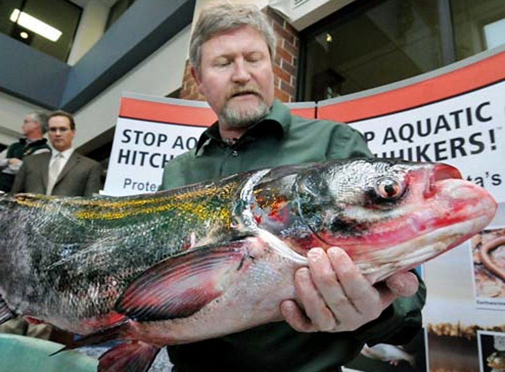 """. <p>6. (tie) ASIAN CARP  <p>We�re betting Stephen Colbert would have one heck of a punch line for this one. (unranked) <p><b><a href=\'http://www.twincities.com/localnews/ci_25432921/minnesota-legislature-considers-renaming-asian-carp\' target=\""""_blank\""""> HUH?</a></b> <p>    (Pioneer Press: Richard Marshall)"""