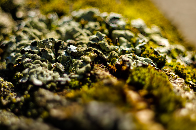 Moss on the Tree 4
