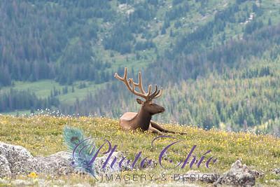 Wildlife & Landscapes
