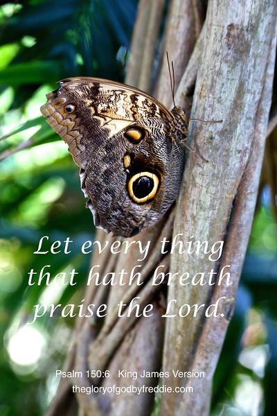 Psalm 150-6 d .jpg