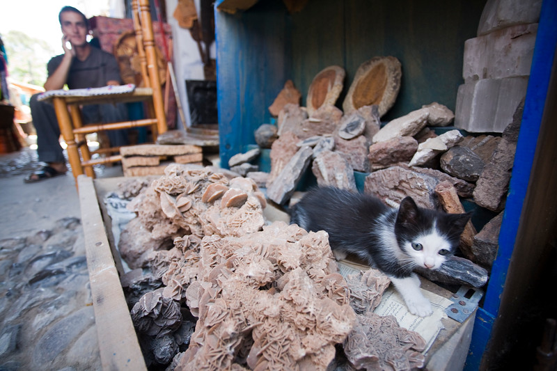 Kitten on a fossil and mineral shop, Chefchaouen, Morocco