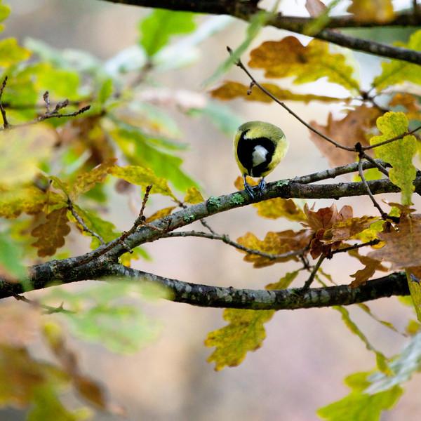 Dag_187_2012-okt-15_1423.jpg