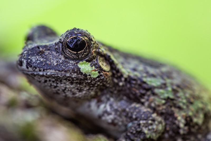 Tree Frog web.jpg