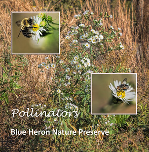 Blue Heron Nature Preserve - Pollinator Garden