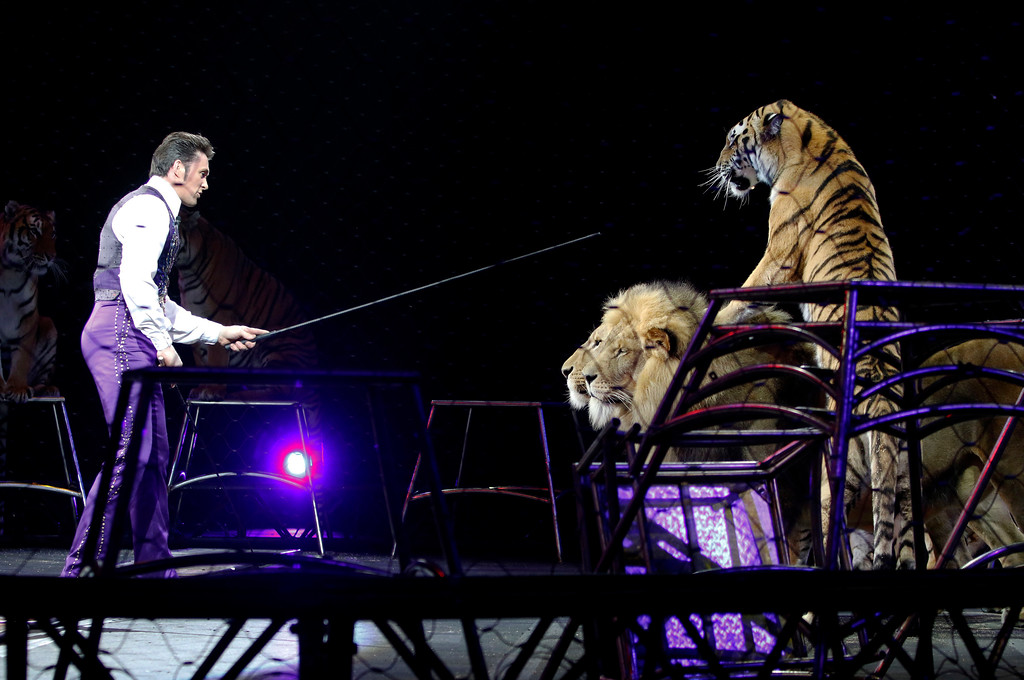 . Big-cat trainer Alexander Lacey performs with lions and tigers Sunday, May 1, 2016, in Providence, R.I., during the show where Asian elephants made their final performance in the Ringling Bros. and Barnum & Bailey Circus.  (AP Photo/Bill Sikes)