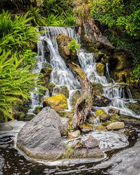 Los Angeles Arboretum 2016