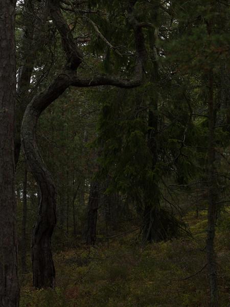 20100712-CF045521.jpg