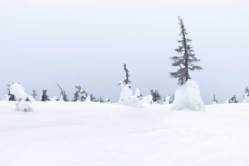 530_Finland.jpg