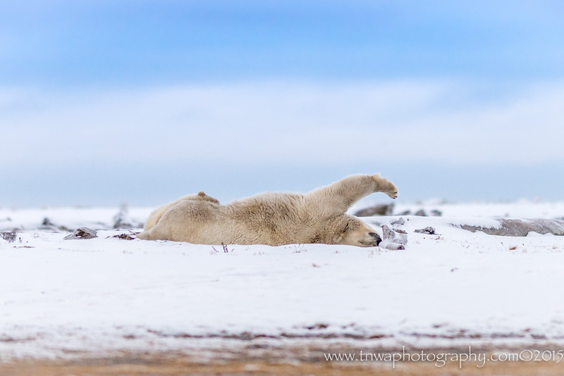 Polar Bear Stretch