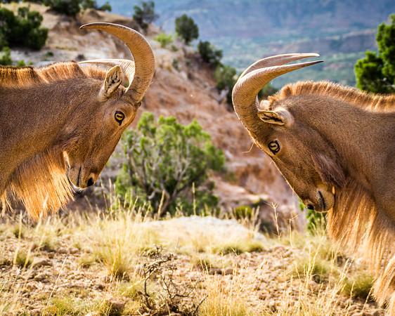 Palo Duro Canyon 8 X 10 contest
