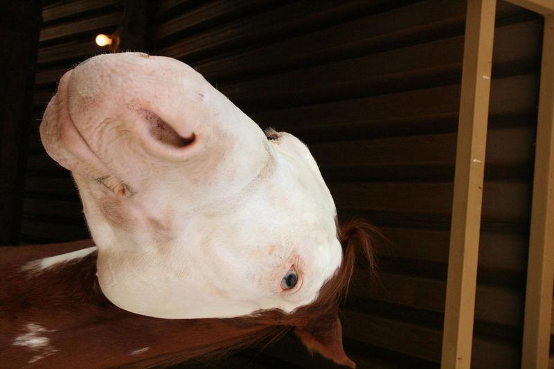 closeup of a horse
