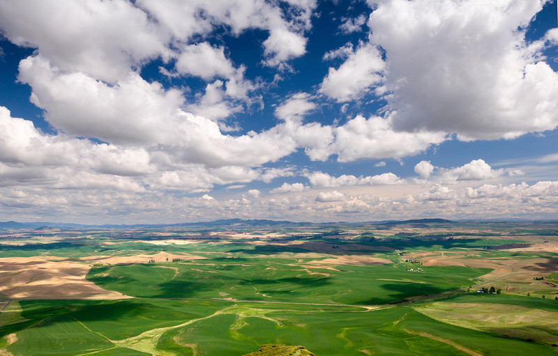Steptoe Butte - Washington  Cotton-white spring clouds skim the rolling green and gold wheat fields of the Palouse Valley, Washington. Steptoe Butte (where this picture was taken) is a 3,612-foot-tall, thimble-shaped quartzite butte, with a corkscrew road to its summit.