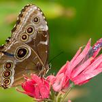 Butterfly_20070401_082.jpg