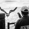 Pelican Rescue 8