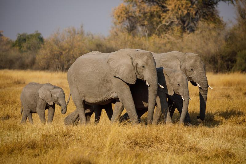 Botswana_0818_PSokol-483.jpg