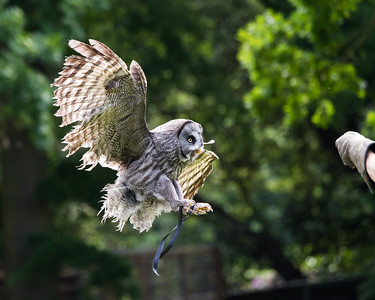 The English School of Falconry and Bird of Prey Centre