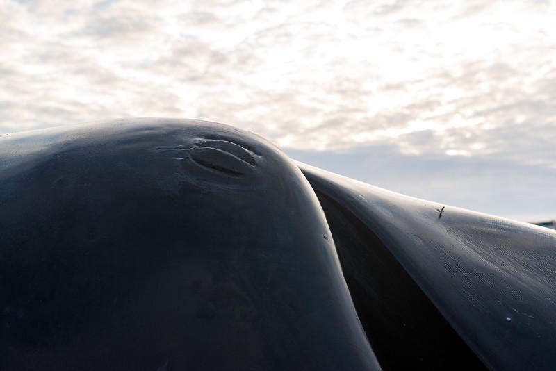 Utqiagvik Whaling-6104890-Juno Kim-nw.jpg