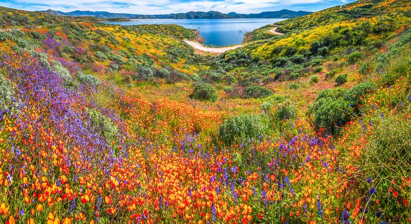 California Spring Wildflower Superbloom Symphony #11: Diamond Valley Lake Wildflower Trail Superbloom!   California Poppy Wild Flower Super Bloom Fine Art Landscape Nature Photography!  Elliot McGucken Fine Art Prints & Luxury Wall Art