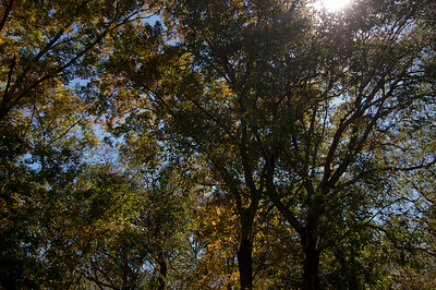 20141019 Allaire State Park