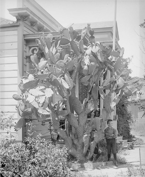 Cactus outside residence on the east side of Broadway near Third Street, Los Angeles, ca.1890