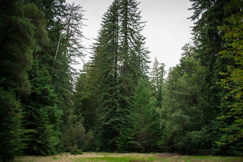 Redwood-26.jpg