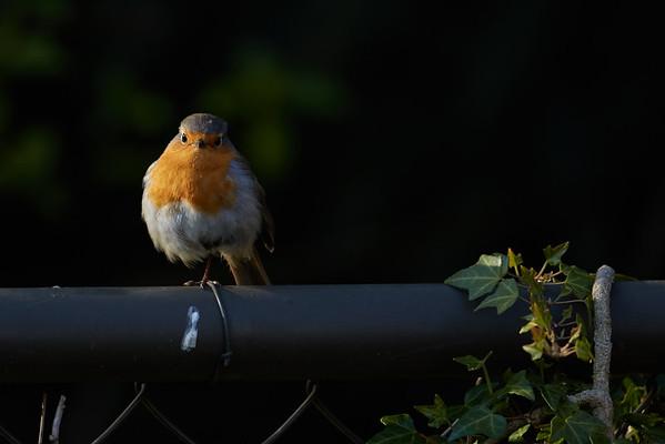 2015-04 Birds in the garden