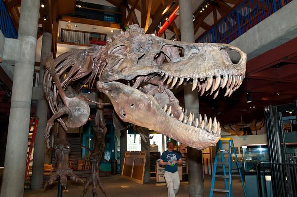 T-Rex Named Sue 2014