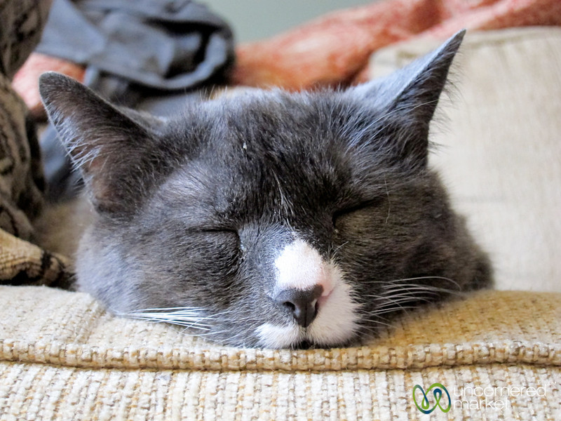 Cat Nap in Vancouver, Canada