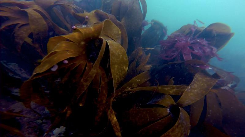 Devon-Underwater-2.jpg