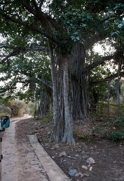 POW-Day 3 Sawi-Madhopur- DSC_2697-Ranthambhore National Park.jpg
