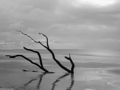 Botany Bay Edisto Island, SC