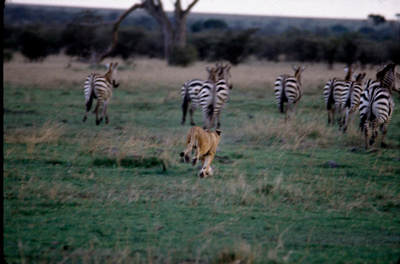 Kenya2_016.jpg