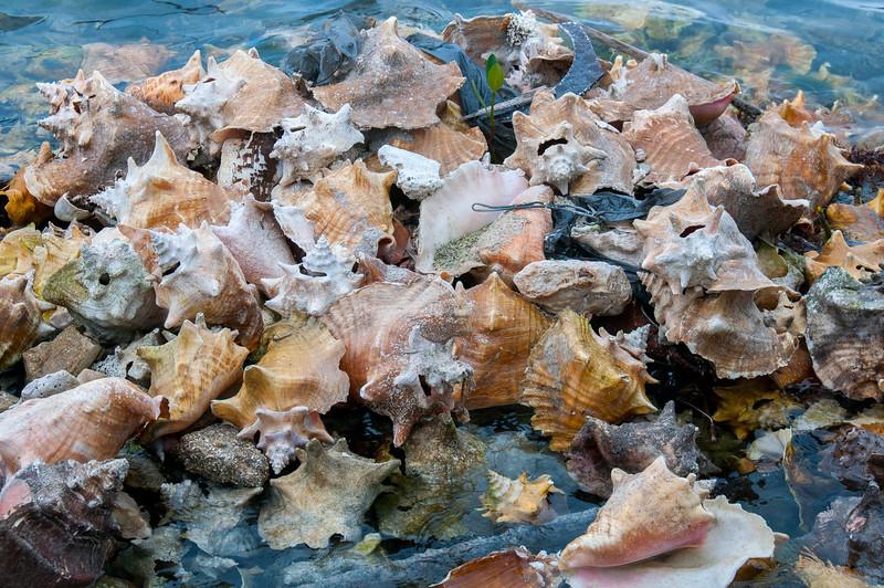 Shells in Caye Caulker, Belize