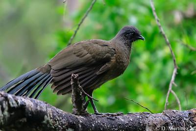RGV Birding Fest