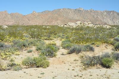 Mojave NP