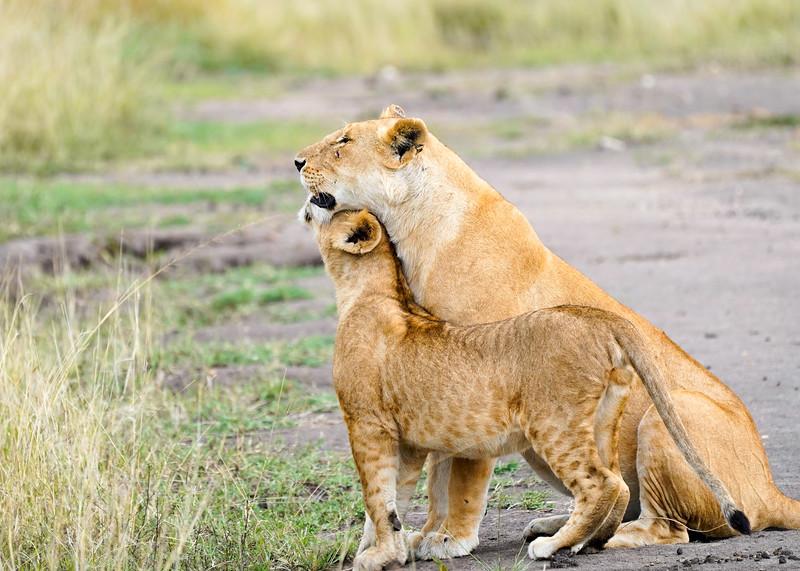 safari-2018-120.jpg