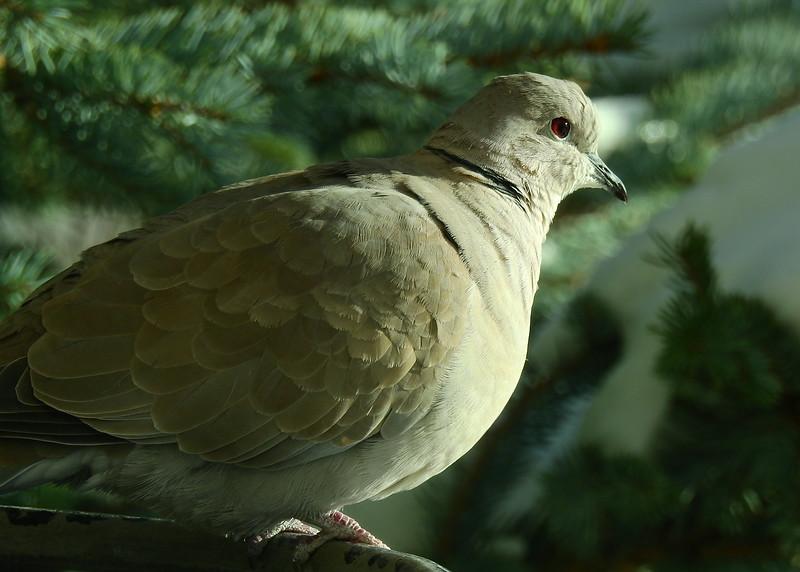 birds (198).JPG