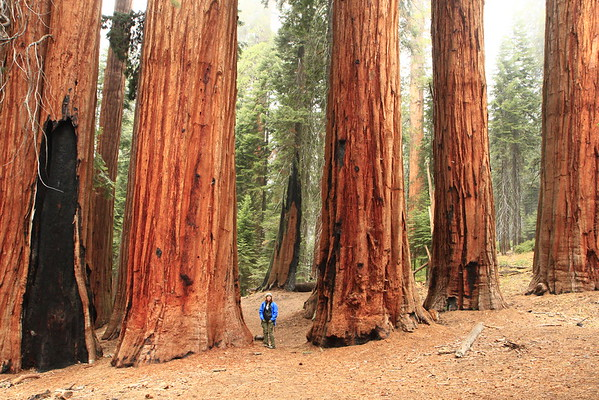 Sequoia National Park - October 2015