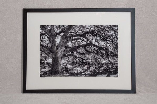 The Century Oak - $175