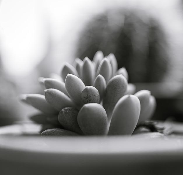 succulent bw 031420-1802.jpg