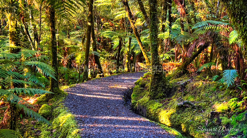The track through the native bush anticipating the stunning views of the Southern Alps reflecting in  Lake Matheson