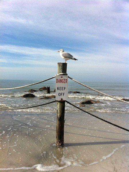 5_1_19 Seagull living life on the edge.jpg