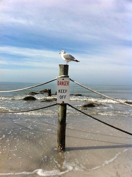 5_1_19 Seagull living life on the edge.jpg