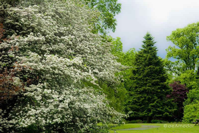 Cylburn Arboretum-aeamador-0210.jpg