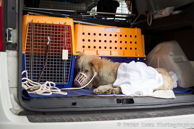 A Day in the Life: SPCA Rescue Team